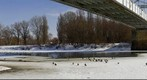 Ducks on Ice / kacsk a jgen
