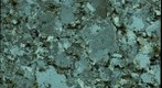 Thin Section of the Middlefield Granite, Middlefield, Massachusetts
