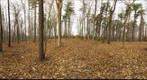 Dairy Bush GigaPan - 168 – November 14 2012
