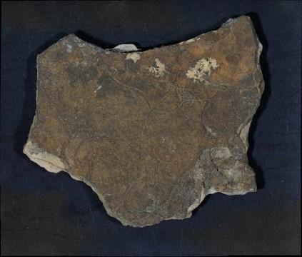 Terminal Ediacaran Trace Fossils