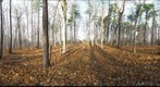 Dairy Bush GigaPan - 169 – November 21 2012