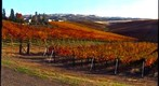 Eagle Ridge Winery