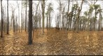 Dairy Bush GigaPan - 170 – November 28 2012