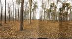 Dairy Bush GigaPan - 171 – December 5 2012