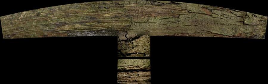 Deltopyxis triangulispora