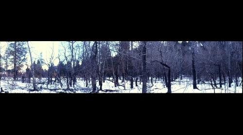 Fern Lake Fire, Moraine Park