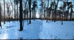 Dairy Bush GigaPan - 174  January 02 2013 