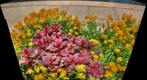 City Flower display