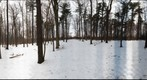 Dairy Bush GigaPan - 175 – January 09 2013