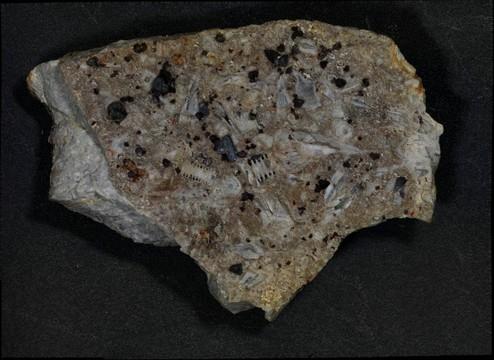 Sphalerite on Fossiliferous Chert