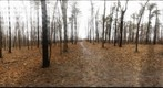 Dairy Bush GigaPan - 178 – January 30 2013