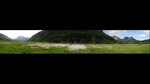 Wollgras zwischen Reuthe und Bizau