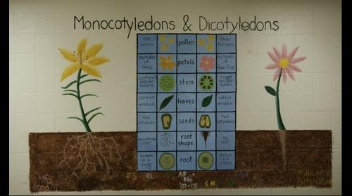 Monocotyledons & Dicotyledons