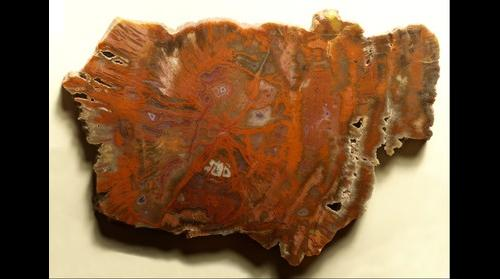 Arizona Petrified Wood Polished Slab