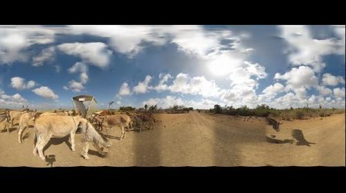 Donkey Sanctuary Bonaire - Park