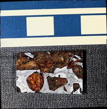 Meteorite: Seymchan Pallasite