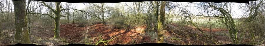 habitat destruction by wild boars