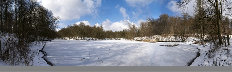 """Goose leg pond"" (Ganzepootvijver) in winter"
