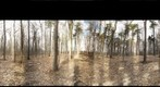 Dairy Bush GigaPan - 187  March 29 2013