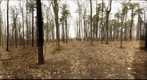 Dairy Bush GigaPan - 188 – April 09 2013