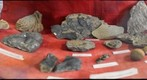 Fossil display at the Virginia Department of Geology and Mineral Resources