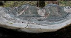 Contact between Fauquier Formation marble and Catoctin Formation greenstone, near Lime Kiln Road, Virginia