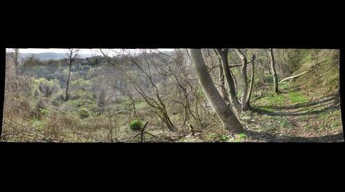 Cornell Hillside Nature Trail