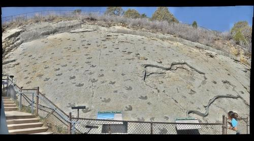 Dinosaur Trackways at Dinosaur Ridge
