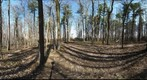 Dairy Bush GigaPan - 191  May 01 2013