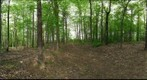 Dairy Bush GigaPan - 193 – May 14 2013