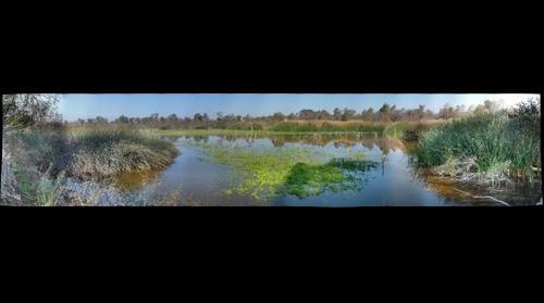 Border_Wetland_12-08