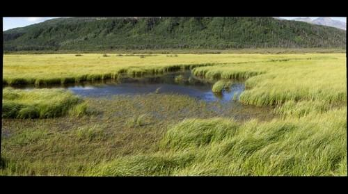 Wetland habitat, Kluane National Park, Yukon, Canada