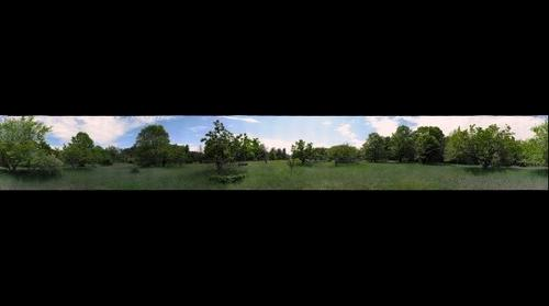 Abandoned Orchard - full panorama