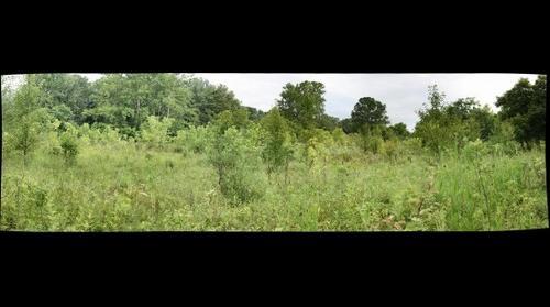 Wingfield Pines: Wetland Sapling Survey