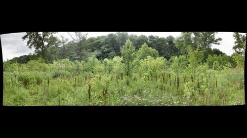 Wingfield Pines:  Herbaceous Plant Survey