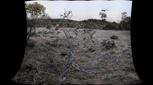 old  bush