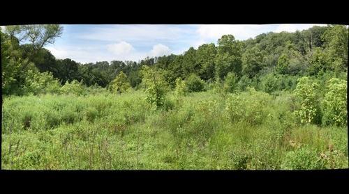 Wingfield Pines: Permanent Sampling Plot 8