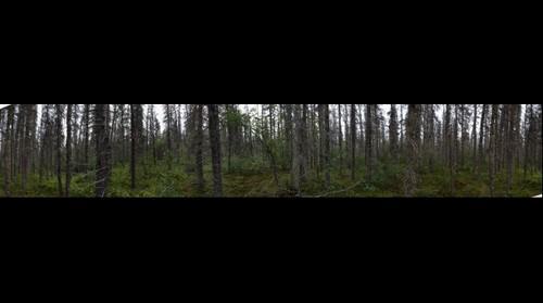Brooks Camp forest - Katmai National Park and Preserve, Alaska