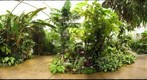 American Orchid Society Greenhouse