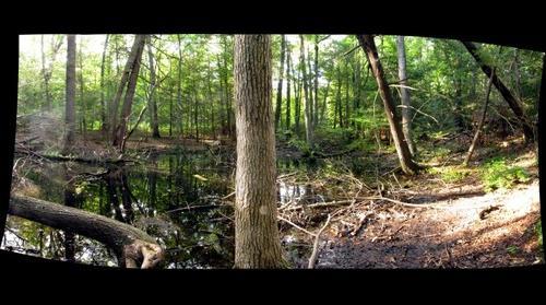 northwest bog