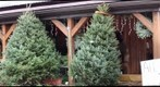 Hozak Tree Farms