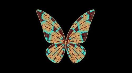 Butterfly Voronoi