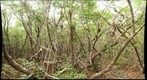 West Lake Mangroves