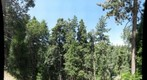 Forest near Lake Arrowhead