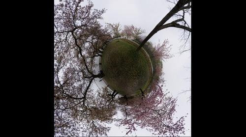 MLK Cherry Blossoms LP