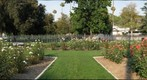 Rose Garden at Fairmount Park, Riverside, California