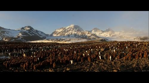 King Penguins, mountains and glaciers at St Andrews Bay