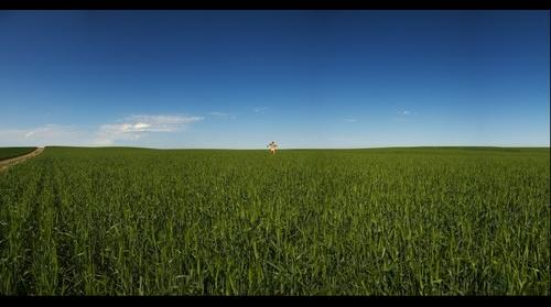 Montana, Winter Wheat
