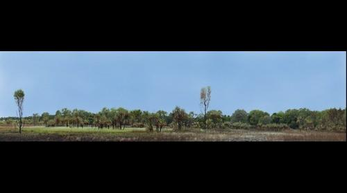 Palm Creek Panorama