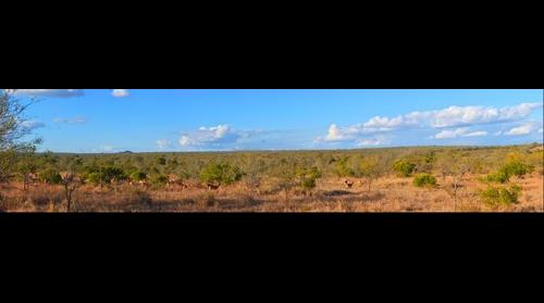 Panorama view in Kruger National Park - South Africa Travel Channel